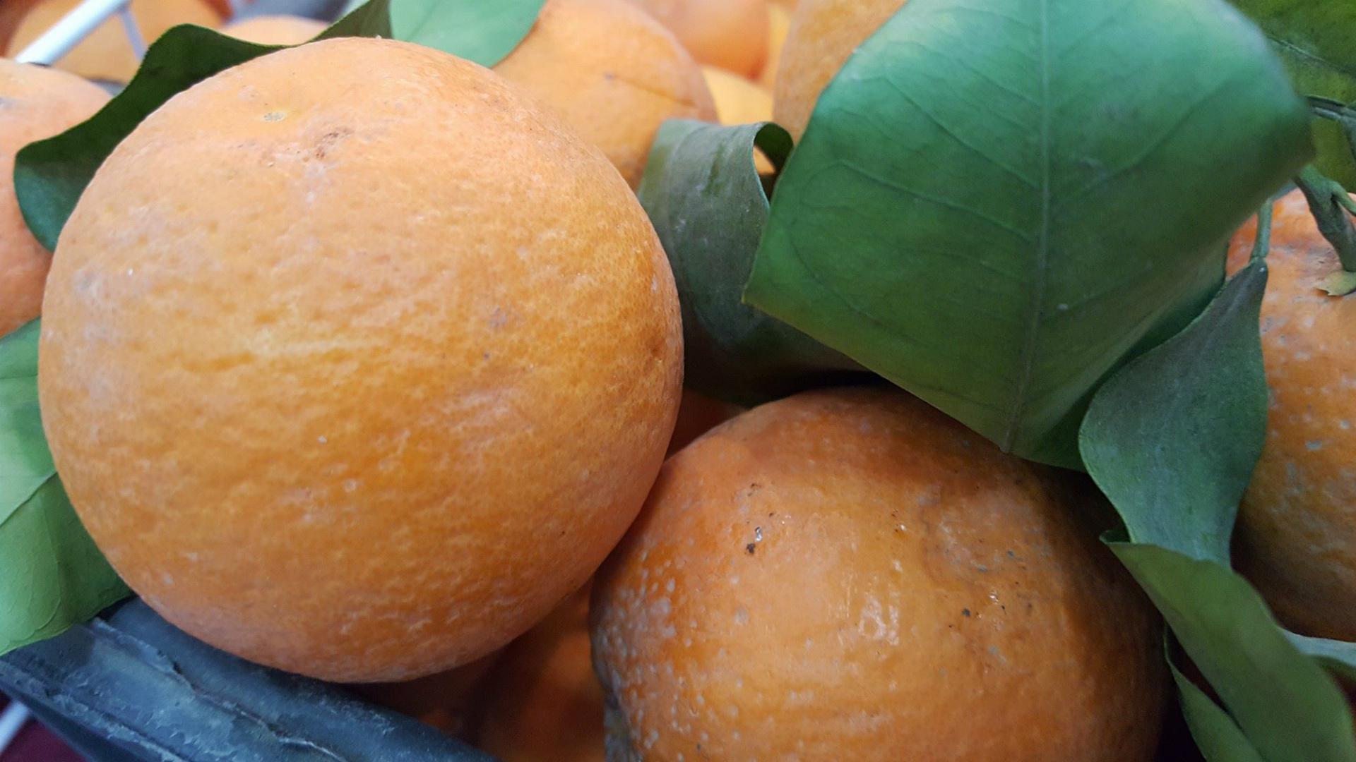 مجلس محافظة ديالى يناشد لإنعاش الواحة البرتقالية